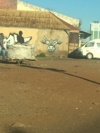 As we pass through Pretoria, at the end of the city, on our way back to Joburg, this crazy looking cow was staring at us !